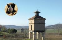 Evenement Belflou Les pigeonniers de Midi-Pyrénées