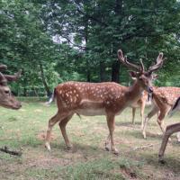 Idée de Sortie Ville sur Lumes Parc Animalier de Charleville-Mézières