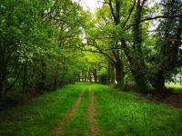 Idée de Sortie Le Bourg d'Hem Circuit pédestre Nature, verdure, bouchures