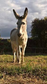 Idée de Sortie Saint Martin d'Auxigny Fili'gr'âne, l'âne et la nature