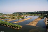 Site naturel des Quinconces Arcachon