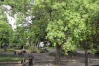 Jardin d´été Arles