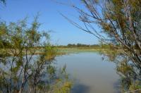 LE SAMBUC - Balade au coeur des marais du Verdier Arles