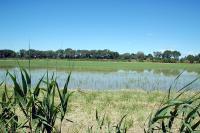 Parc-naturel-regional-de-Camargue Arles