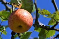Idée de Sortie Beaumé Pomme, jus de pomme, gelée de Pomme