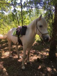 Idée de Sortie Saint Antoine d'Auberoche Centre cheval Poney