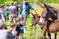 Idée de Sortie Marsac Visite estivale de la ferme de Maillofargueix