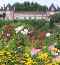 Roseraie du Chateau Loudenne Vensac