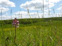 Idée de Sortie Croth Réserve naturelle régionale de la Vallée des Cailles