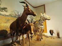 Idée de Sortie La Chapelle Saint Ursin Muséum d'Histoire Naturelle