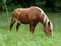 Idée de Sortie Vergt Centre Equestre Poney Club Elevage de l'Ile
