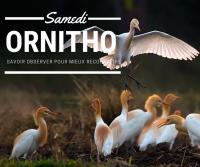 Evenement Sainte Ramée Visite guidée à Terres d'Oiseaux