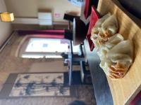 Restaurant Sainte Hélène OJ Bento