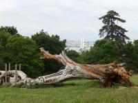 Balade à roulettes  Le parc Palmer Artigues près Bordeaux