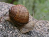 Idée de Sortie Châteauneuf sur Cher Visites secrètes : Escargots Le Jacquin