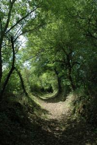 Idée de Sortie Saint Barthélemy de Bussière La Grande Boucle du Parc : Etape 4 : De Champniers-Reilhac aux Salles-Lavauguyon