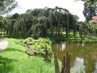 Arboretum de la vallée-aux-Loups Le Plessis Robinson