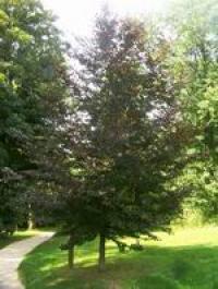 Idée de Sortie Augy Arboretum du fort de Condé