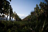 Idée de Sortie Nauviale Vigne de Signols - Biodynamie