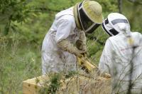 Idée de Sortie Le Cayrol Mon rucher mes abeilles