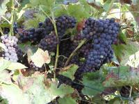 Idée de Sortie Cransac Mine de vin