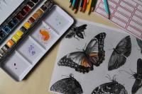 Idée de Sortie Creil Coquillages et papillons