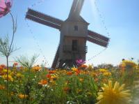 Idée de Sortie Rouilly Sacey Journées Européennes des Moulins et du Patrimoine meulier