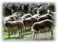Idée de Sortie Saint Beauzély Gaec de Faral - Fromage de brebis et colis de viande