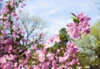 Foire-aux-fleurs-Les-printanieres-des-Alpilles Mouriès