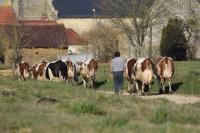 Evenement Avreuil Visite à la ferme - Annulée