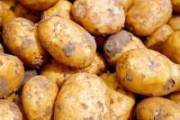 Evenement Marcillat en Combraille Festival de la pomme de terre