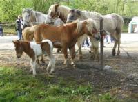 Evenement Ambeyrac Foire aux chevaux à Capdenac