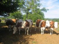 Evenement Aquitaine Portes ouvertes à la ferme laitière de Bosloubet