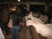Evenement Salles la Source Visite d'un élevage de chèvres à la ferme de Cassos