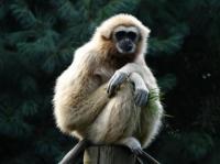 Journee-des-gibbons Mulhouse