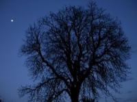 Evenement Vassogne Sortie nature : Le chemin des Demoiselles de la nuit