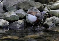 Evenement Wiège Faty Le Festival de l'Oiseau et de la Nature : Les oiseaux des rivières