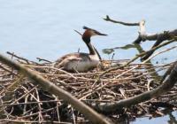 Evenement Wiège Faty Le Festival de l'Oiseau et de la Nature : Les oiseaux de l'étang de Boué