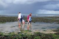 Evenement Anisy Devenez une sentinelle du littoral