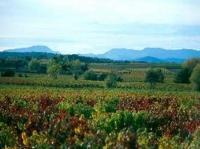 Entre vignobles et collines - PR35 Aigaliers