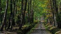Idée de Sortie Ballay Randonnée VTT en forêt de La Croix aux Bois