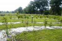 Arborétum du domaine de Moré Landes