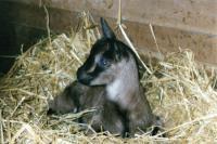 Idée de Sortie Gramond Visite d'un élevage de chèvres et de vaches La Ségaline