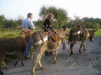 Idée de Sortie Aouste Randonnée avec des ânes de bât - Liart