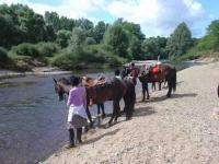 Idée de Sortie Châteauneuf sur Cher Ferme Equestre de Chambon