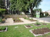 Idée de Sortie Morcourt Visite guidée du jardin des plantes médicinales