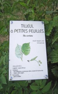 Idée de Sortie Plomion Journées Européennes du Patrimoine : visite de l'arboretum
