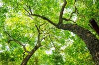 Evenement Saint Aigulin Journée internationale des forêts