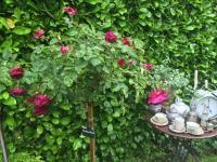 Le Jardin de l´échassière Dammartin en Goele