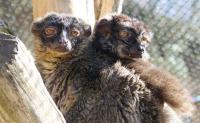 Idée de Sortie Pierremande Le jardin exotique centre d'accueil pour petits primates